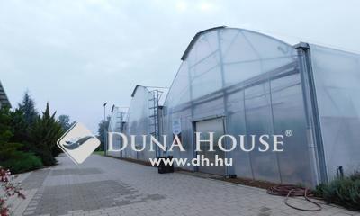 Kiadó Ipari ingatlan, Bács-Kiskun megye, Kecskemét, Reptér környékén