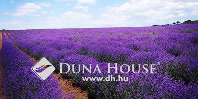 Eladó Ház, Pest megye, Bugyi, Varázslatos levendula kert